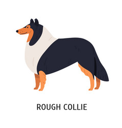 Rough collie charming herding or pastoral dog vector