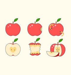 Set red ripe apple collections whole and bitten vector