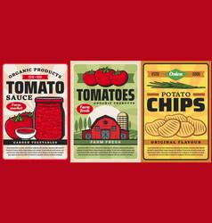 Tomato sauce ketchup potato chips farm food vector