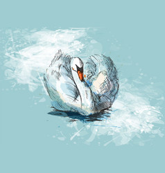 colored hand sketch floating swans vector image