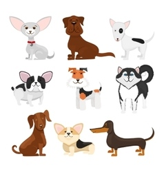 Dog breeds cartoon set vector image