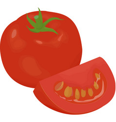 fresh red tomato isolated on white vector image