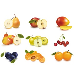 group with different fruit vector image