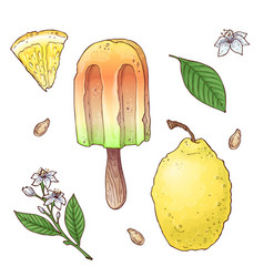 set of citrus ice cream vector image