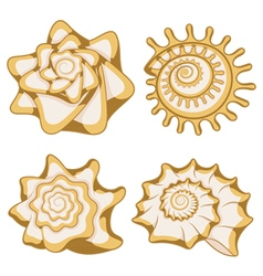 Set of color graphic sea shells vector