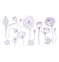 hand drawn outline floral elements set collection vector image