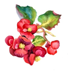 Colorful watercolor red flowers vector image