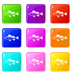 European perch perca fluviatilis icons 9 set vector