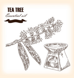 melaleuca hand drawn teatree essential oil vector image