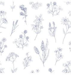 outlined herbs pattern seamless vintage botanical vector image