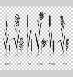 Cereals plants set carbohydrates sources vector