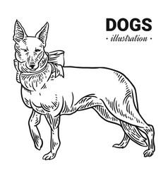 Dog hand drawn drawing engraving vector