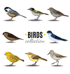 Birds collection sandpiperswallowtrush vauxs-swift vector
