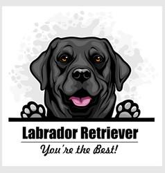 Black labrador - peeking dog head dog vector