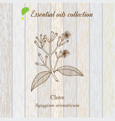 clove essential oil label aromatic plant vector image