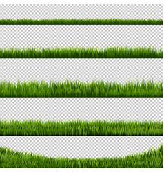 green grass transparent background vector image