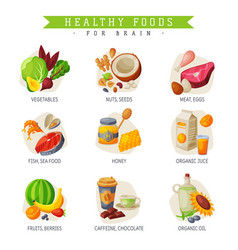 Healthy food for brain vegetables nuts and seeds vector