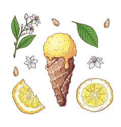 set citrus ice cream vector image