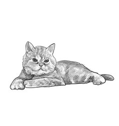 adorable lying persian cat isolated on white vector image