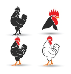 Chicken2 vector