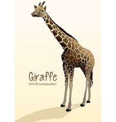 Realistic giraffe standing with shadow vector image