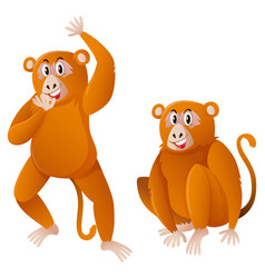 two monkeys with brown fur vector image