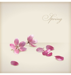 Floral cherry blossom flowers spring design vector
