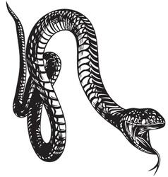 Big Snake vector image