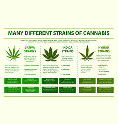 Different strains cannabis horizontal info vector