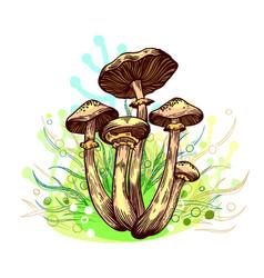 Honey fungus mushroom vector