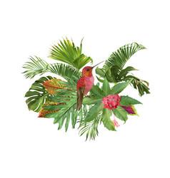 hummingbird tropic composition vector image