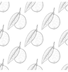 lime fruits hand drawn sketch as seamless pattern vector image