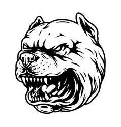 vintage angry pitbull head concept vector image