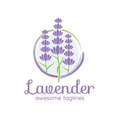 lavender flower logo vector image