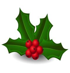 Christmas holly vector image