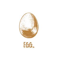 egg vector image