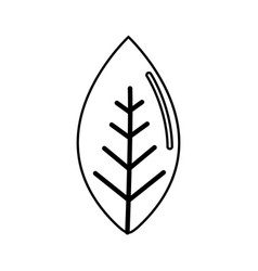Figure line leaf of plant icon vector