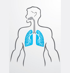 Lungs and human body vector