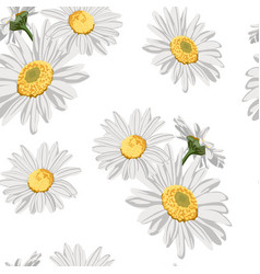 Pattern with chamomile camomile flowers vector