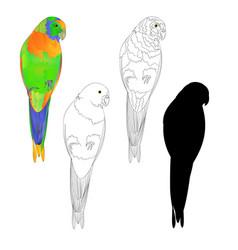 Sun conure parrot tropical bird vector