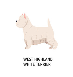 west highland white terrier or westie lovely vector image