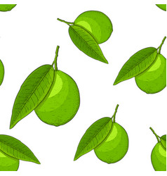 lime fruits hand drawn colored sketch as seamless vector image