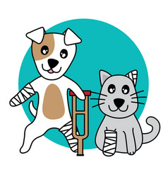 character dog and cat hurt leg broken on w vector image