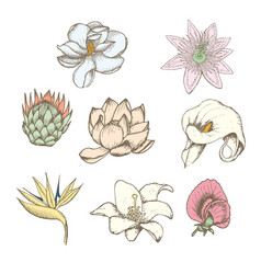 colored drawing botanical exotic flowers set vector image
