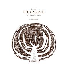 Vintage cabbage vector