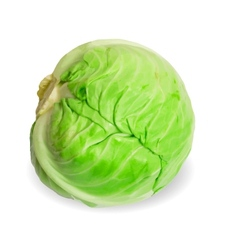 Fresh cabbage isolated on white background vector image