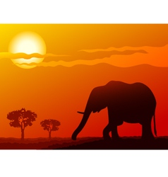 elephant at sunset vector image vector image