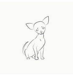 Chihuahua dog vector