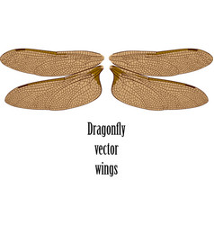 dragonfly wings vector image
