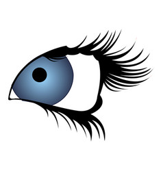 isolated beauty eye vector image
